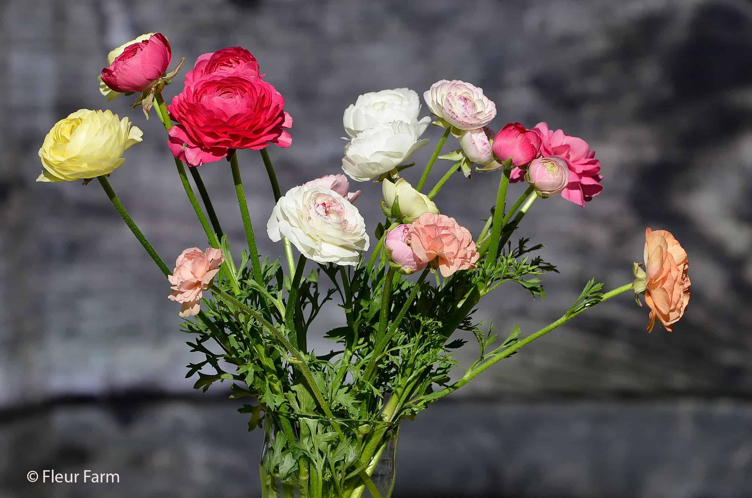 Fleur Farm Ranunculus