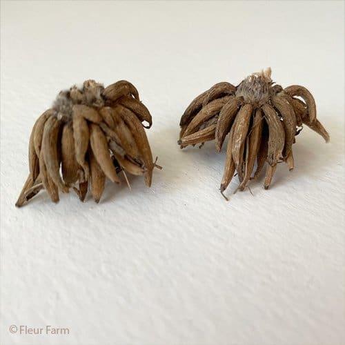 Ranunculus tubers